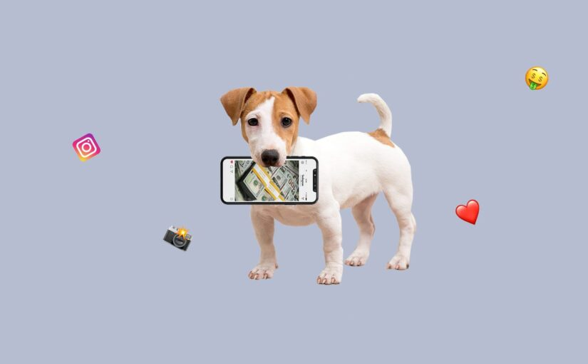 How to manage and monetize a pet's Instagram
